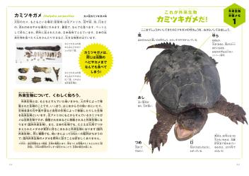 カミツキガメ